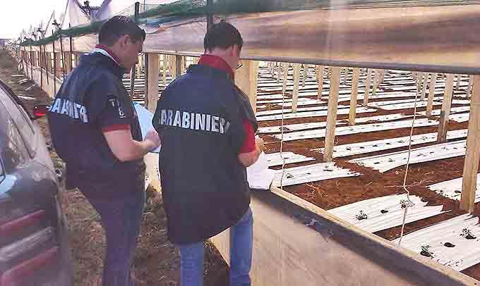 Biancavilla, denunciato imprenditore agricolo per assunzioni in nero