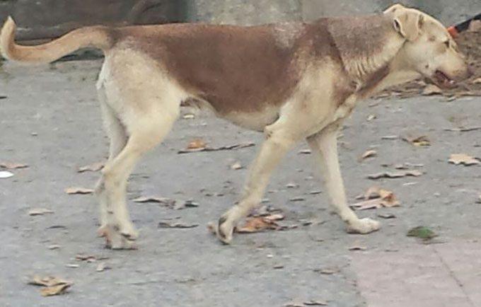 """Cani avvelenati a Paternò, la """"barbara"""" risoluzione del randagismo"""