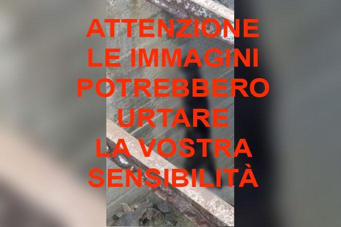 Shock a Santa Maria di Licodia: ritrovato cane impiccato