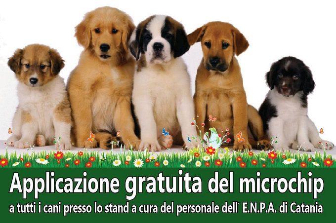 Motta Sant'Anastasia, domenica Festa di primavera e microcippatura dei cani