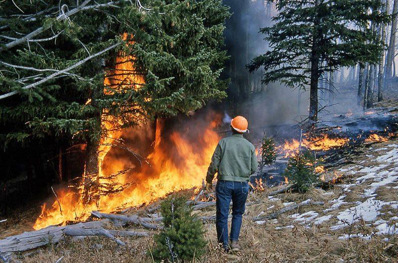 Lavoratori forestali: parte la campagna antincendio. Lunedì al via anche gli operai dell'azienda foreste