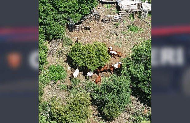 Bronte, rubati 14 cavalli. I Carabinieri li ritrovano