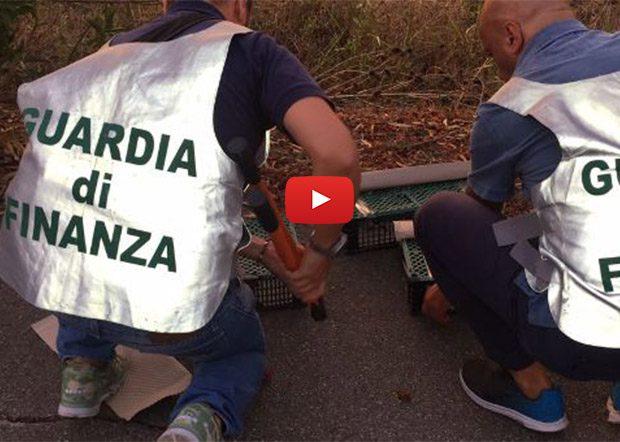 Catania. Guardia di Finanza sequestra 110 cardellini