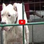 Catania. Demolito ricovero per cani: bestiole in pessime condizioni (VIDEO DEMOLIZIONE)