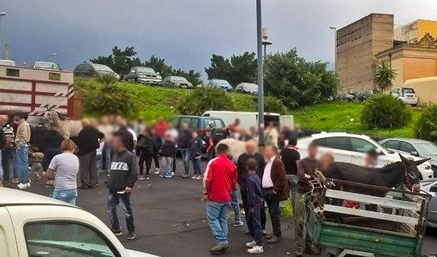 Aggressione alla fiera abusiva del bestiame di Biancavilla: processo slitta al 27 settembre