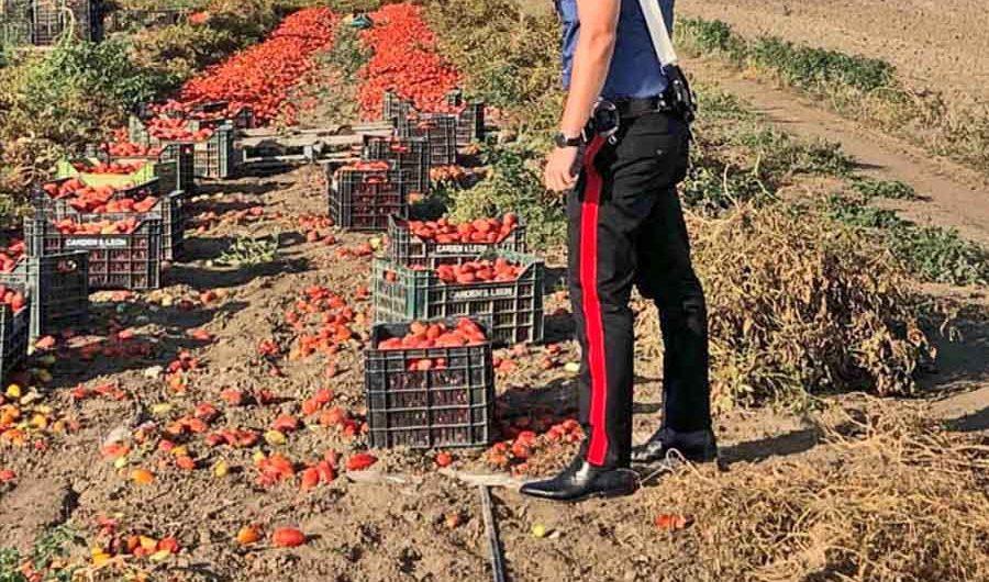Misterbianco. Sfruttava lavoratori stranieri: 30 mila euro di multa e denuncia per imprenditore