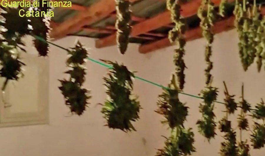 Belpasso. Sequestrata piantagione di cannabis, un arresto