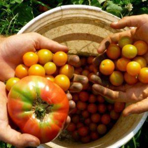 """La rete """"L'Isola che c'è"""" presenta una proposta di legge regionale sull'agricolutra biologica"""
