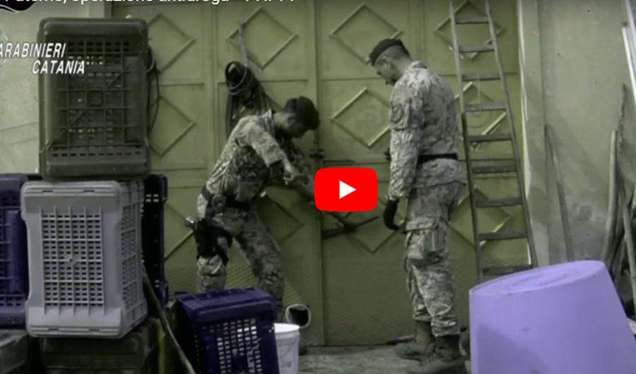 Paternò. Operazione antidroga: 6 arresti, sequestrata una tonnellata di marijuana (VIDEO)