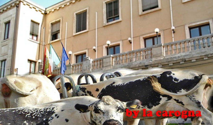 """Biancavilla, sul vicesindaco si decide al """"mercato delle vacche"""""""